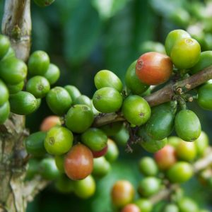 Hester M Poole and a history of coffee. Image: Colombia - Coffee Triangle 013 by McKay Savage via Flickr